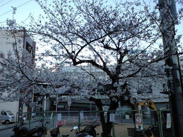 桜のある景色
