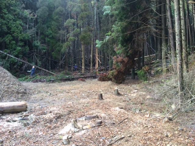伐採 作業